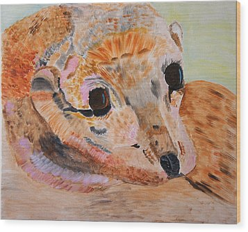 Soulful Eyes Of A California Sealion Wood Print by Meryl Goudey