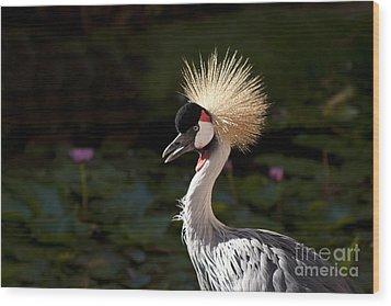 South African Grey Crowned Crane Wood Print by Sharon Mau
