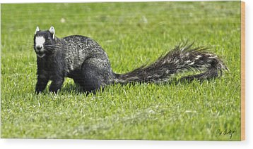 Southern Fox Squirrel Wood Print by Phill Doherty
