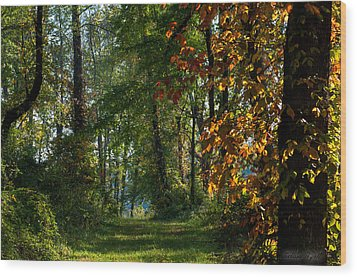 Southern Indiana Fall Colors Wood Print by Melissa Wyatt