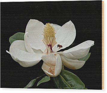 Southern Magnolia With Bee Wood Print by Sandra Anderson