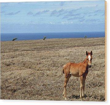 Southernmost Pony Wood Print by James Mancini Heath