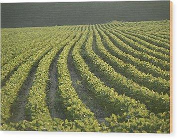 Soybean Crop Ready To Harvest Wood Print by Brian Gordon Green