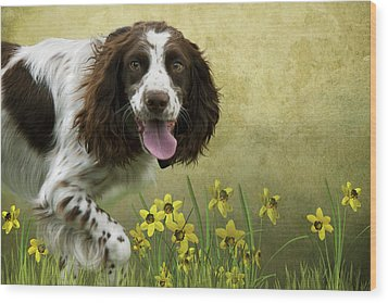 Spaniel With Daffodils Wood Print by Ethiriel  Photography