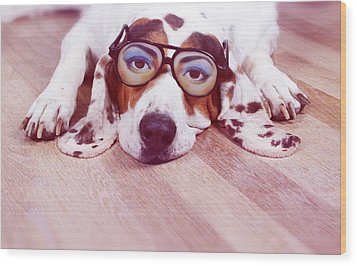 Spanish Hound Dog Lying With Joke Glasses Wood Print by Retales Botijero