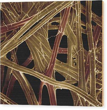 Spanish Moon Moth Cocoon Fibers 105x Wood Print by Albert Lleal