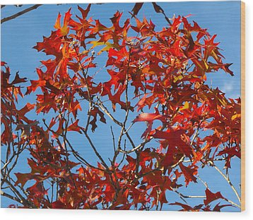 Spanish Oak Tree In Texas Wood Print by Rebecca Cearley