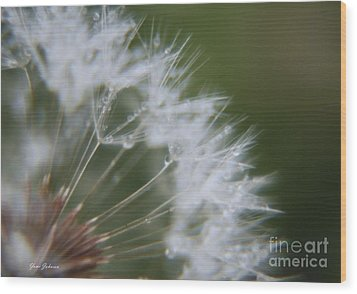 Sparkle Seeds Wood Print by Yumi Johnson