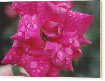 Sparkled Rose 2 Wood Print by Beverly Hammond