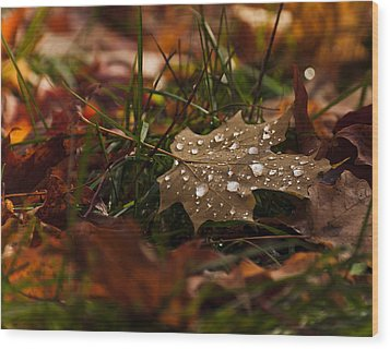 Wood Print featuring the photograph Sparkling Gems by Cheryl Baxter