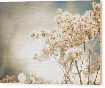 Sparkly Weeds Wood Print by Cheryl Baxter