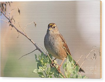 Sparrow Bird Perched . 40d12304 Wood Print by Wingsdomain Art and Photography