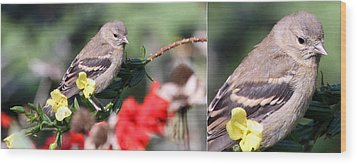 Wood Print featuring the photograph Sparrow With Detail by Mark J Seefeldt