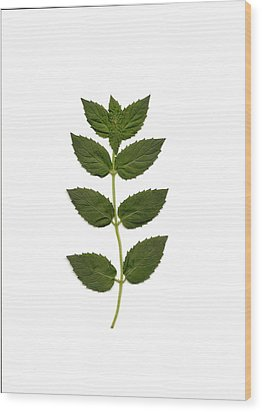 Spearmint Wood Print by Mary Ann Southern
