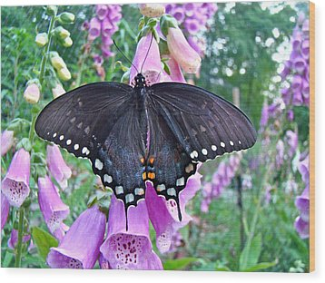 Spicebush Swallowtail Butterfly On Foxgloves - Papilio Troilus Wood Print by Mother Nature