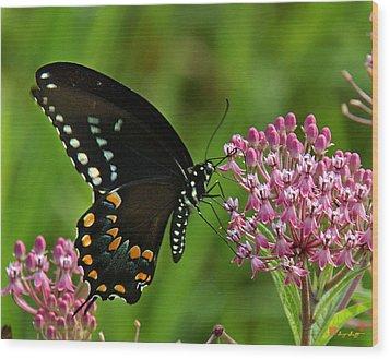 Spicebush Swallowtail Din039 Wood Print by Gerry Gantt