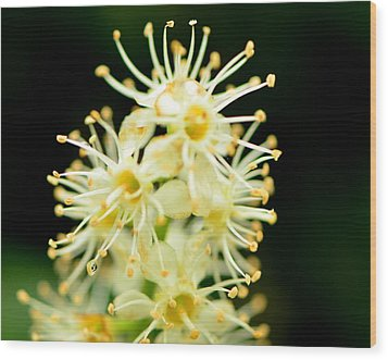 Wood Print featuring the photograph Spider Flower by Tanya Tanski