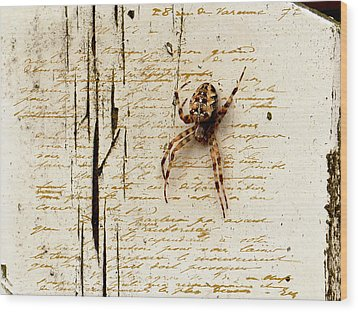 Spider Letter Wood Print