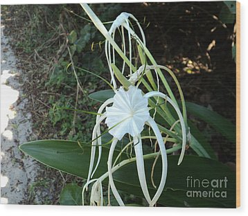 Wood Print featuring the photograph Spider Lily3 by Megan Dirsa-DuBois