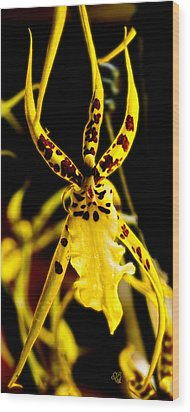 Spider Orchid Wood Print by Barbara Middleton