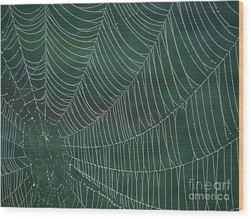 Spider Web With Dew Drops Wood Print by Chad and Stacey Hall