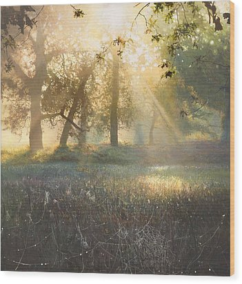 Spider's Diamonds Wood Print by Helen Parsley