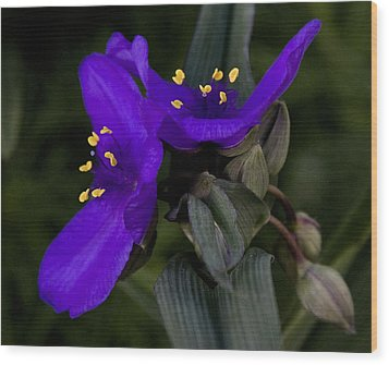 Spiderwort Lovers Wood Print by Michael Friedman
