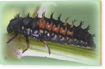 Spiky Caterpillar  Wood Print by Maureen  McDonald