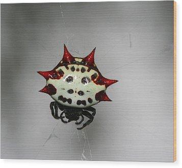 Spiny Orb Weaver Wood Print by April Wietrecki Green