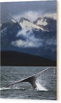 Splash From Tail Of Humpback Whale Wood Print by Richard Wear