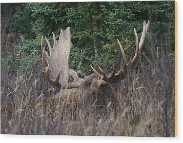 Wood Print featuring the photograph Splendor In The Grass by Doug Lloyd