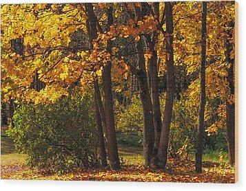 Splendor Of Autumn. Maples In Golden Dresses Wood Print by Jenny Rainbow