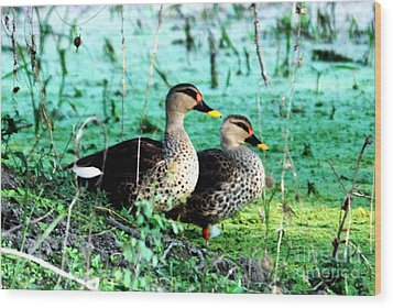 Wood Print featuring the photograph Spot Bill Ducks by Pravine Chester