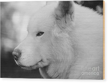 Spot In Black And White Wood Print by Lynda Dawson-Youngclaus