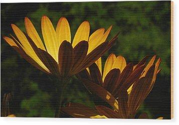 Spotlight On Ganzia Wood Print