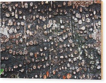 Spotted Bark Wood Print by Jennifer Bright
