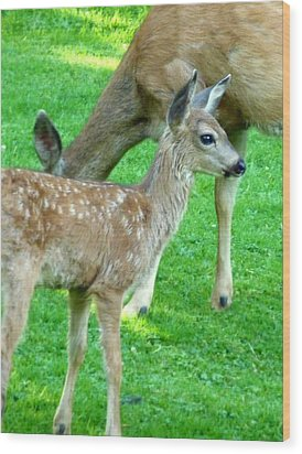 Spotted Fawn And Doe Wood Print by Cindy Wright