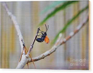 Spotted Oleander Moth Wood Print by Lynda Dawson-Youngclaus
