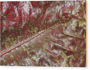 Spotted Red Leaf Wood Print