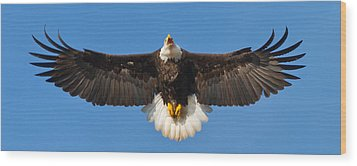 Wood Print featuring the photograph Spread Eagle by Randall Branham