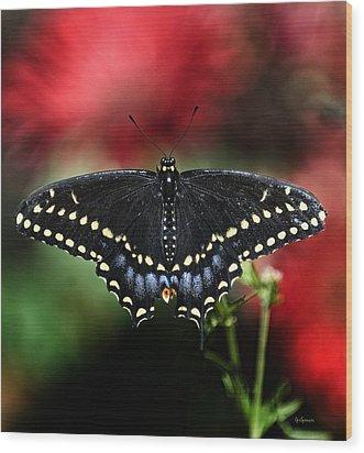 Spread The Wings Wood Print by Lisa  Spencer