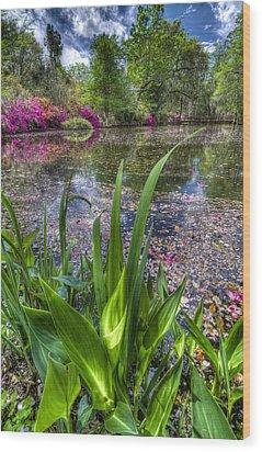 Spring At Magnolia Plantation - Charleston Sc Wood Print by Drew Castelhano