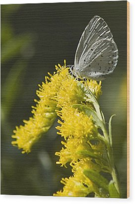 Spring Azure And Goldenrod Wood Print