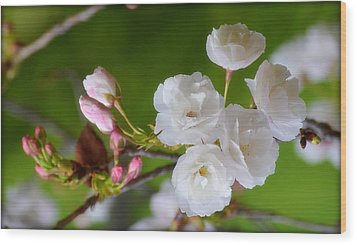 Wood Print featuring the photograph Spring Beauty by Rima Biswas