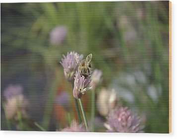 Wood Print featuring the photograph Spring Bee by Serene Maisey