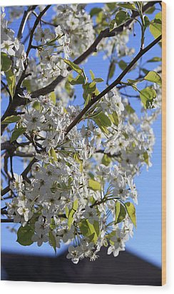 Wood Print featuring the photograph Spring Blooms by Kay Novy