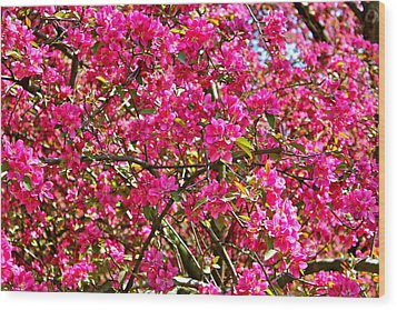 Spring Blossom Wood Print by Felix Zapata