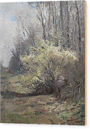 Spring Blossom  Wood Print by Ylli Haruni