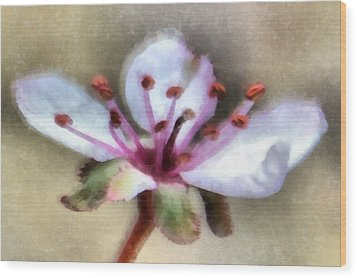 Spring Blossoms 1 Wood Print by Angelina Vick