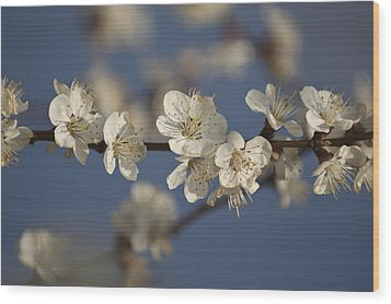 Spring Blossoms Wood Print by Ayhan Altun